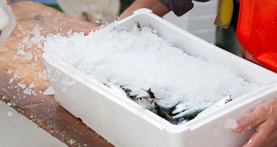 Conditions de livraison de poisson frais sur Paris et sa région